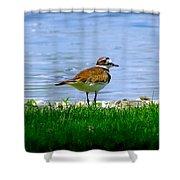 Sad Bird Near Pond Shower Curtain