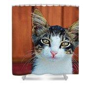 Sad Cat Shower Curtain