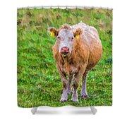Sad Cow - Painterly Shower Curtain