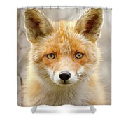 Sad Eyed Fox Of The Lowlands - Red Fox Portrait Shower Curtain