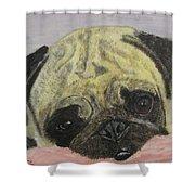 Snugly  Pug Shower Curtain