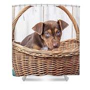 Sad Puppy Shower Curtain