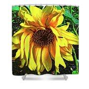 Sad Sunflower Shower Curtain