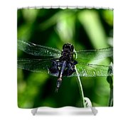 Saddlebag Dragonfly Shower Curtain