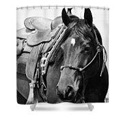 Saddled To Go Shower Curtain