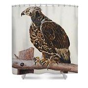 Safari Hawk Shower Curtain