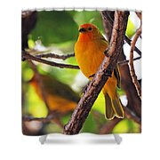 Saffron Pair Shower Curtain