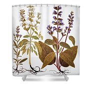 Sage, 1613 Shower Curtain