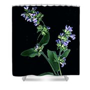 Sage Blossom  Shower Curtain