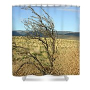 Sage Brush And Tumble Weed Shower Curtain