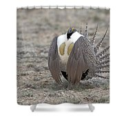 Sage Grouse Shower Curtain