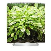 Sage Plant Shower Curtain