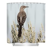 Sage Thrasher On Perch Shower Curtain
