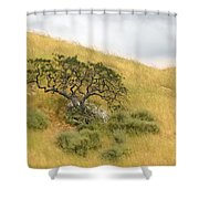 Sage Under Oak Shower Curtain