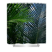 Sago Palm Fronds Shower Curtain