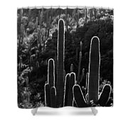 Saguaro Backlit Black And White Shower Curtain