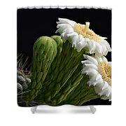 Saguaro Blooms  Shower Curtain