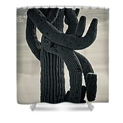 Saguaro Cactus Armed And Twisted Shower Curtain