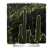 Saguaro Cactus Backlit Shower Curtain