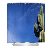 Saguaro Cactus H Shower Curtain