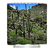 Saguaro Hillside Shower Curtain