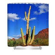 Saguaro Np Shower Curtain
