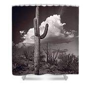 Saguaro Sunset Arizona Bw Shower Curtain