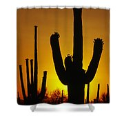 Saguaro Sunset Shower Curtain by Sandra Bronstein