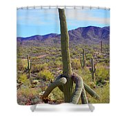 Saguaro With Down Twist Shower Curtain