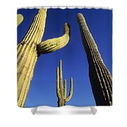 Saguaros Dwaft One Another Shower Curtain