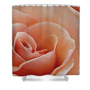 Sahara Light Tan Cream Rose Shower Curtain