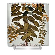 Saint-johns-wort, 1613 Shower Curtain