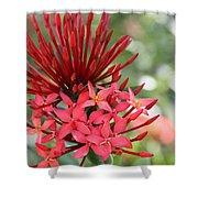 Saint Lucia Flower IIi Shower Curtain