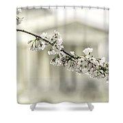 Sakura At The Basin Shower Curtain