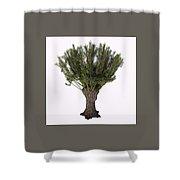 Salix Viminalis Tree Shower Curtain