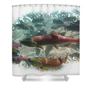 Salmon Migration Shower Curtain