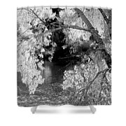 Salmon River Autumn Shower Curtain