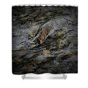 Salmon Run Shower Curtain