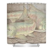 Salmon Spawn Shower Curtain