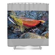 Salmon Spawning Shower Curtain