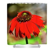 Salsa Red Coneflower Shower Curtain