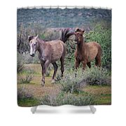 Salt River Wild Horses-img_747217 Shower Curtain