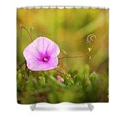 Saltmarsh Morning Glory Flower  Shower Curtain