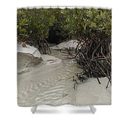 Saltwater Creek Shower Curtain