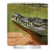 Saltwater Crocodile By Kaye Menner Shower Curtain