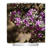 Salvia Dorrii Shower Curtain