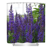Salvia In The Spring Shower Curtain