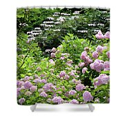 Pink Hydrangeas In Mirabell Garden Shower Curtain