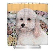 Sammy Shower Curtain