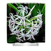Samoan Spider Lily Shower Curtain
